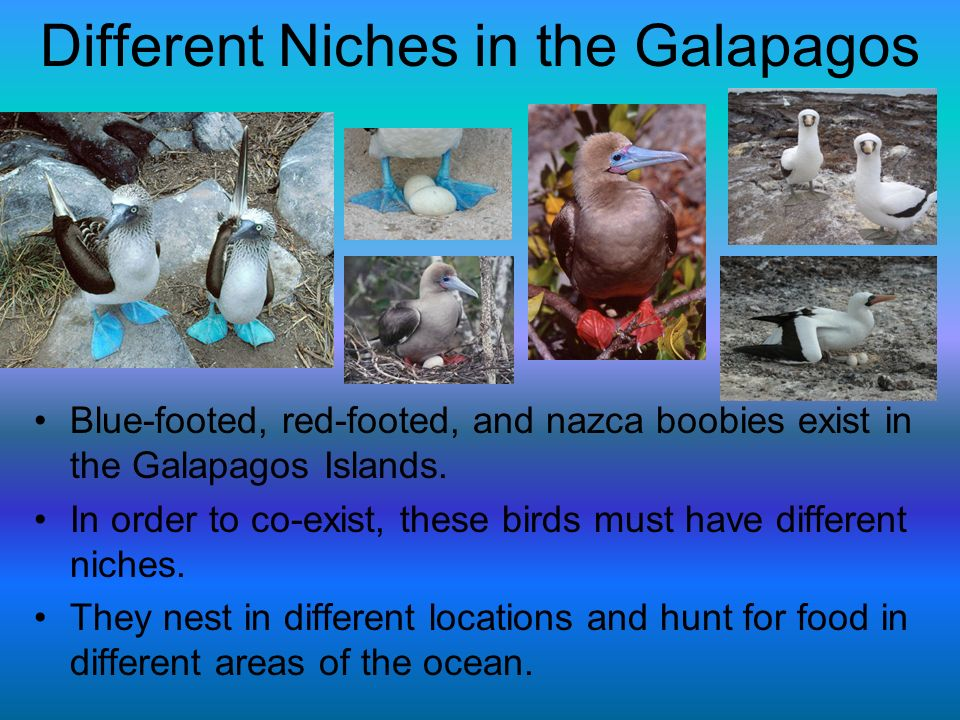 Different Niches in the Galapagos