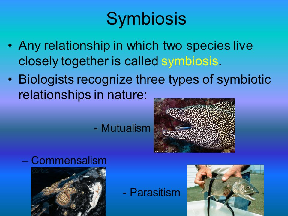 Symbiosis Any relationship in which two species live closely together is called symbiosis.