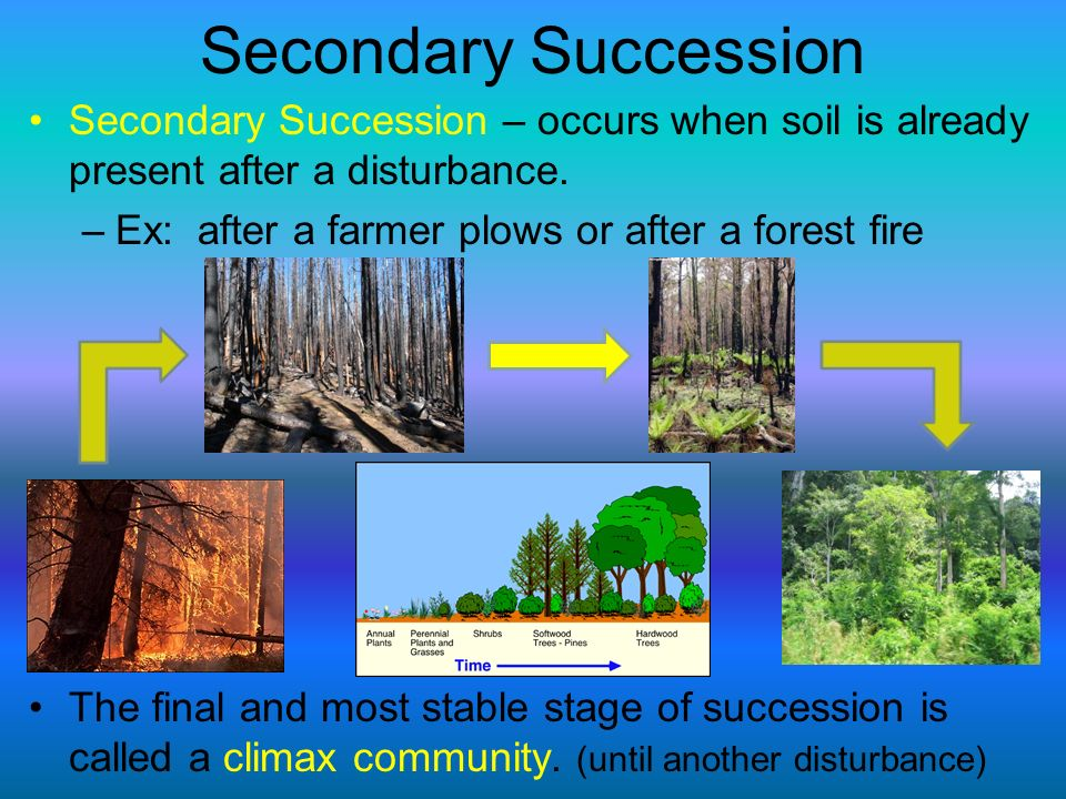 Secondary Succession Secondary Succession – occurs when soil is already present after a disturbance.
