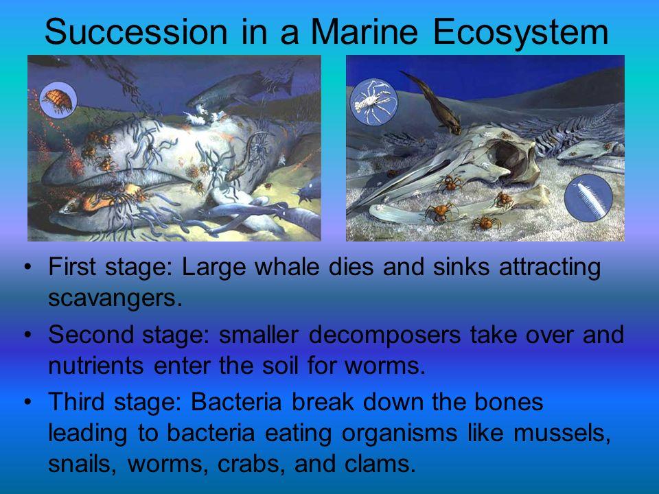 Succession in a Marine Ecosystem