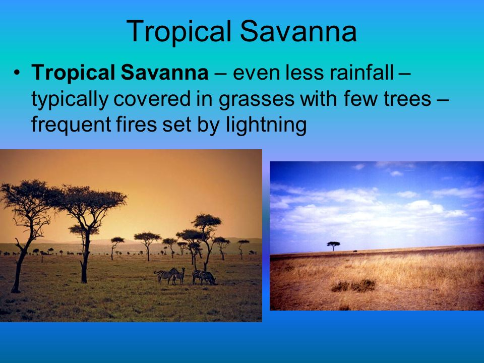Tropical Savanna Tropical Savanna – even less rainfall – typically covered in grasses with few trees – frequent fires set by lightning.