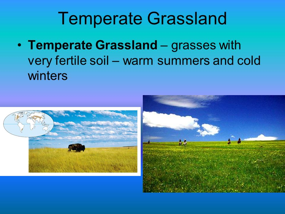 Temperate Grassland Temperate Grassland – grasses with very fertile soil – warm summers and cold winters.