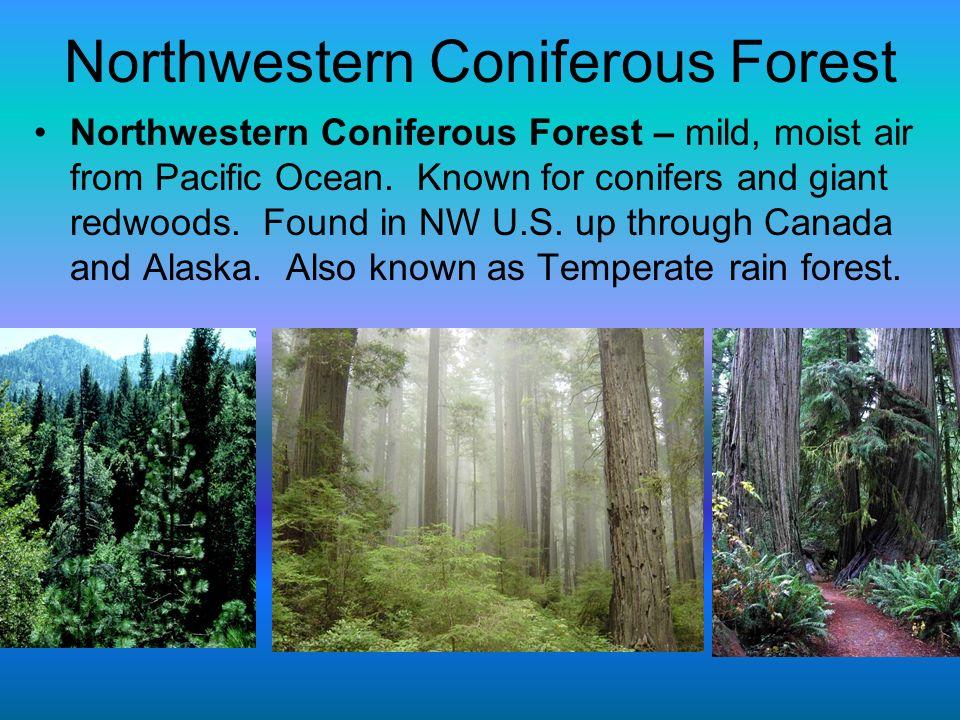 Northwestern Coniferous Forest