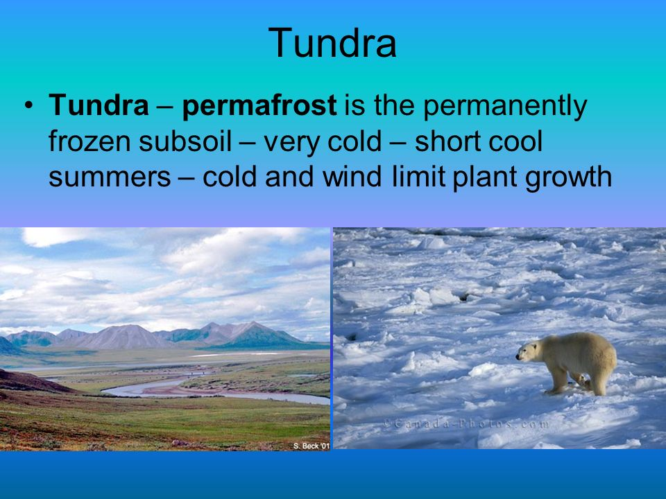 Tundra Tundra – permafrost is the permanently frozen subsoil – very cold – short cool summers – cold and wind limit plant growth.