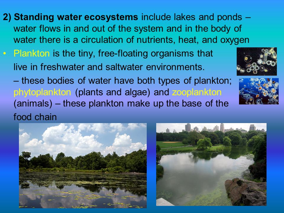 2) Standing water ecosystems include lakes and ponds – water flows in and out of the system and in the body of water there is a circulation of nutrients, heat, and oxygen