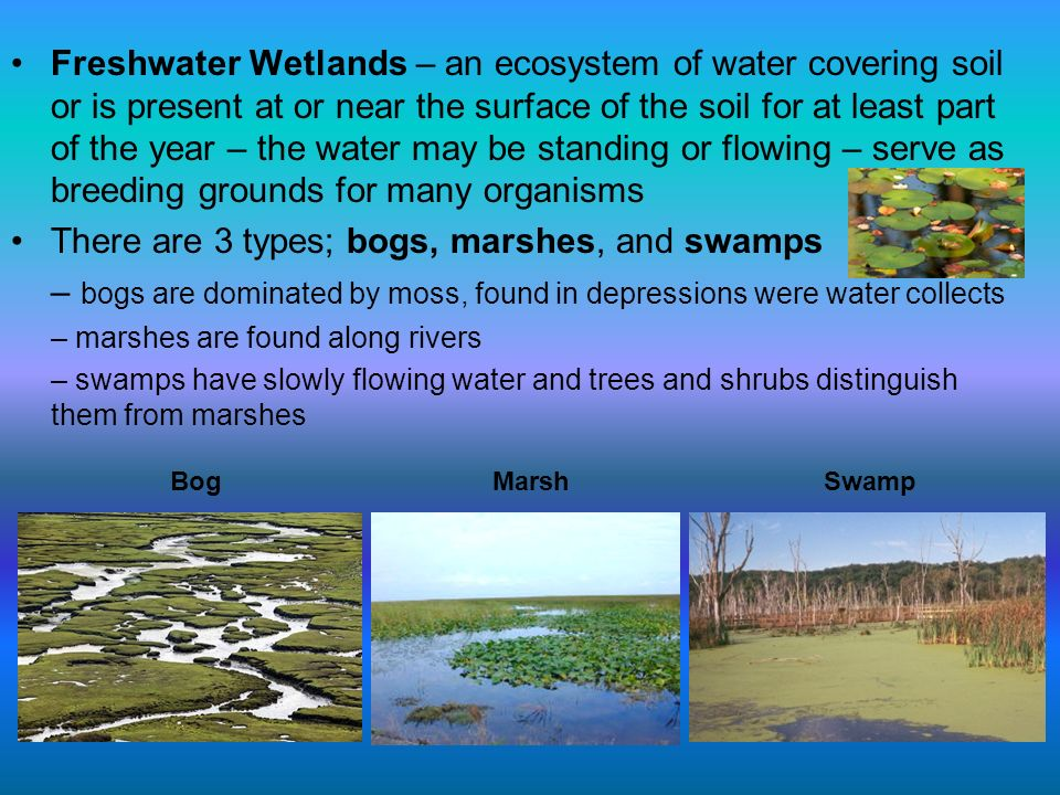 There are 3 types; bogs, marshes, and swamps
