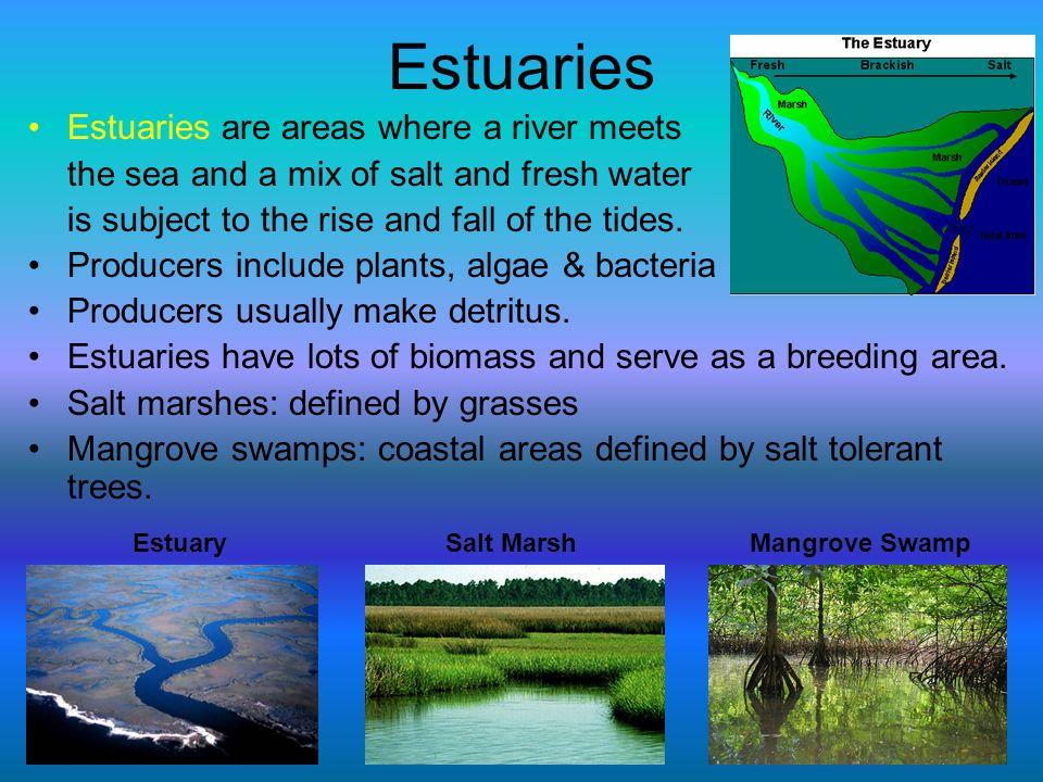 Estuaries Estuaries are areas where a river meets