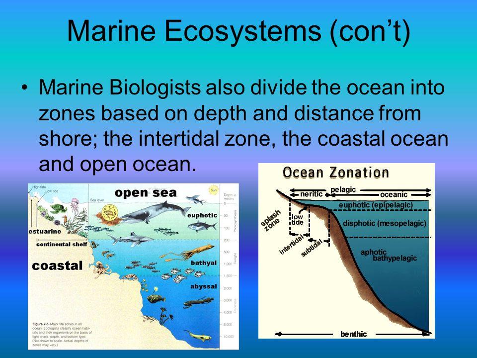Marine Ecosystems (con't)