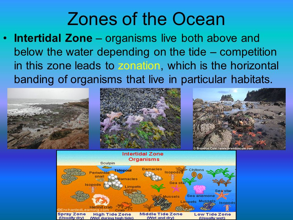 intertidal zones as significant environment for organisms and producers Organisms living in this zone have a highly variable and often hostile environment intertidal organisms these intertidal producers are eaten by.