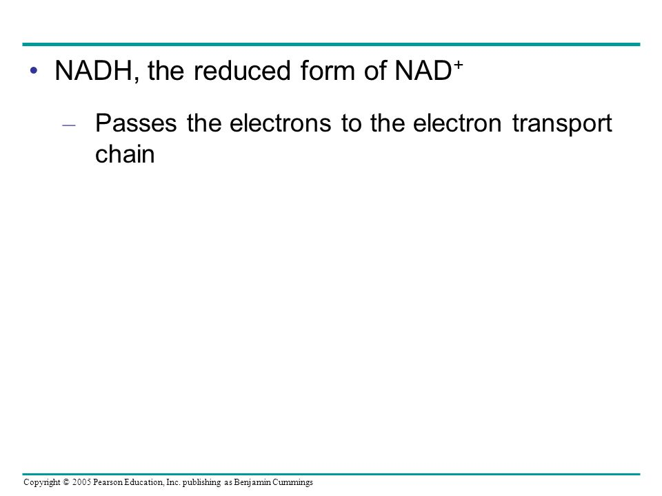 NADH, the reduced form of NAD+