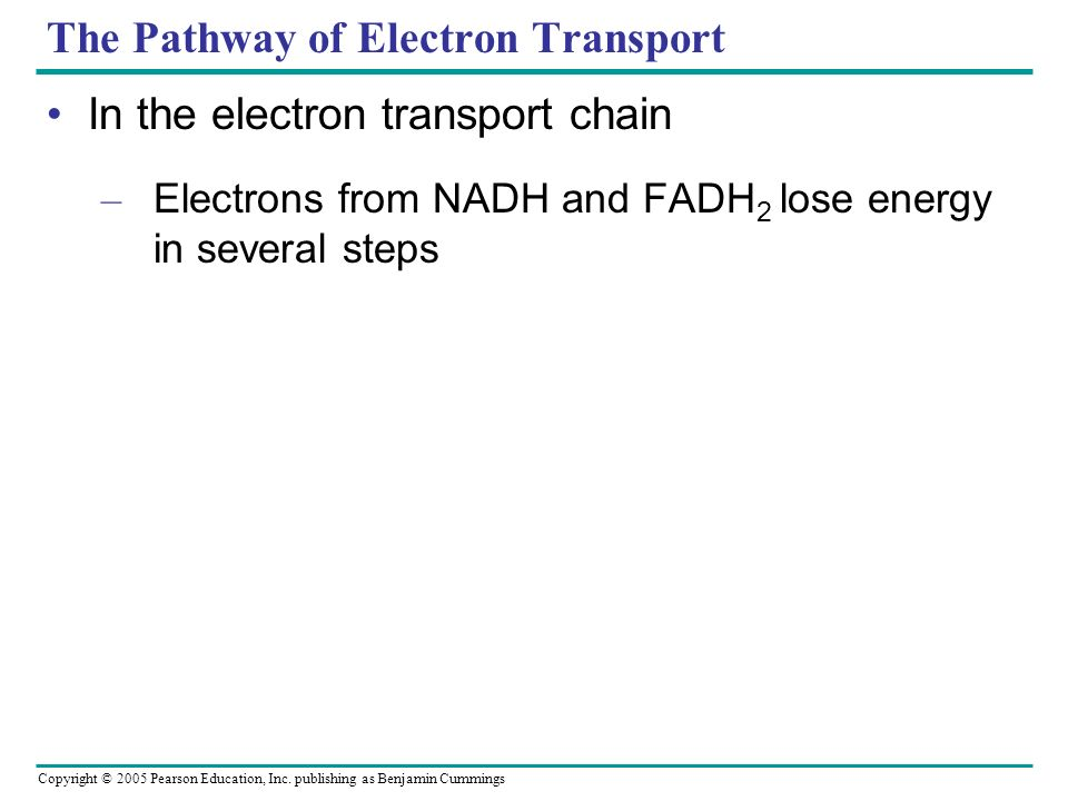 The Pathway of Electron Transport