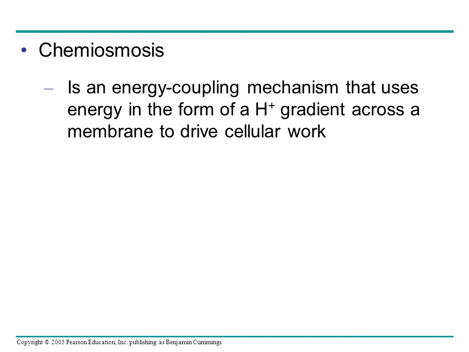 Chemiosmosis Is an energy-coupling mechanism that uses energy in the form of a H+ gradient across a membrane to drive cellular work.