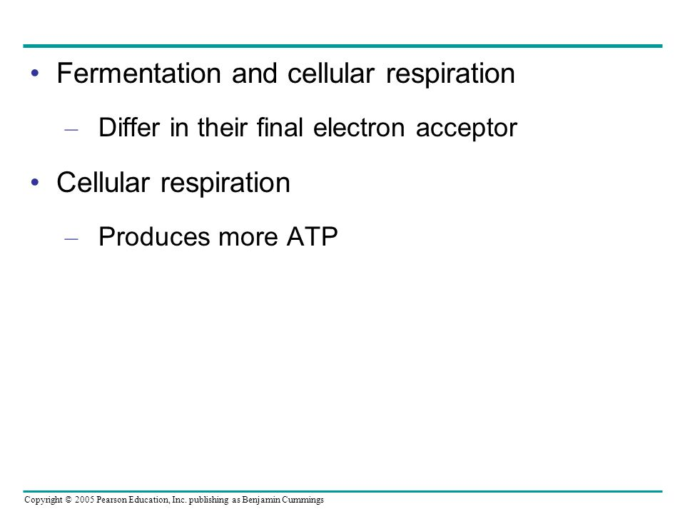 Fermentation and cellular respiration