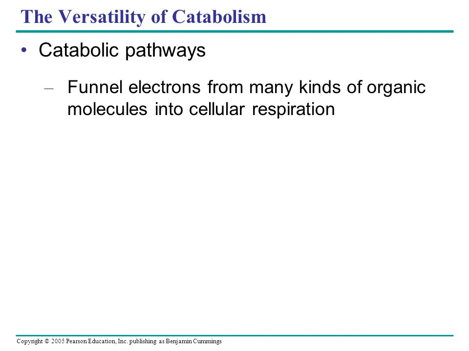 The Versatility of Catabolism