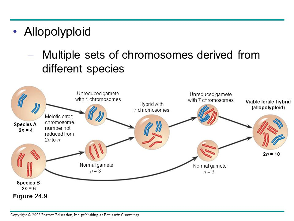 Allopolyploid Multiple sets of chromosomes derived from different species. Figure Meiotic error;
