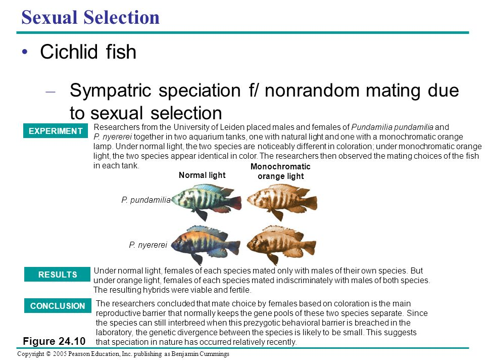 Sexual Selection Cichlid fish