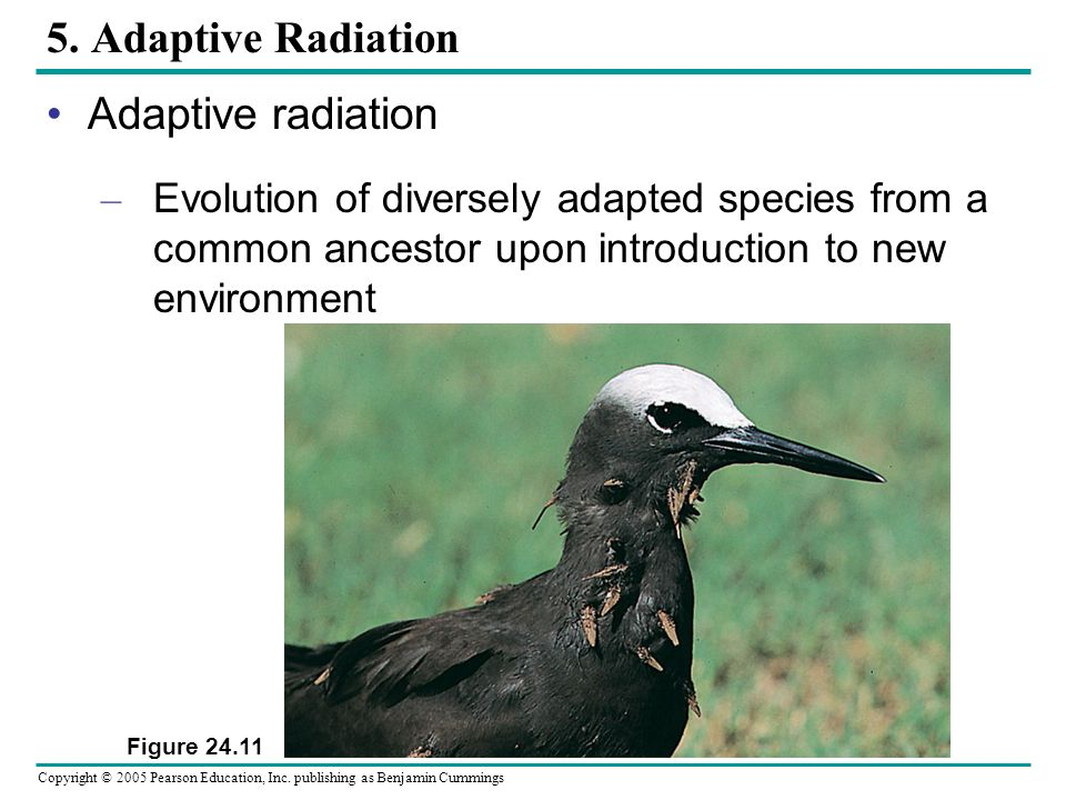 5. Adaptive Radiation Adaptive radiation