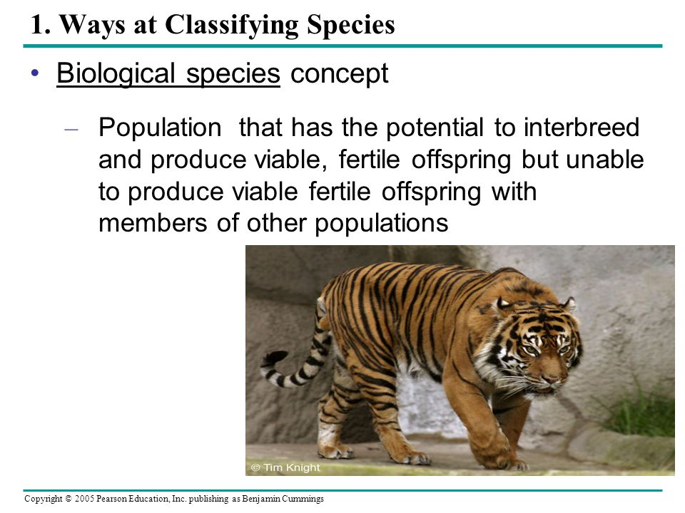 1. Ways at Classifying Species