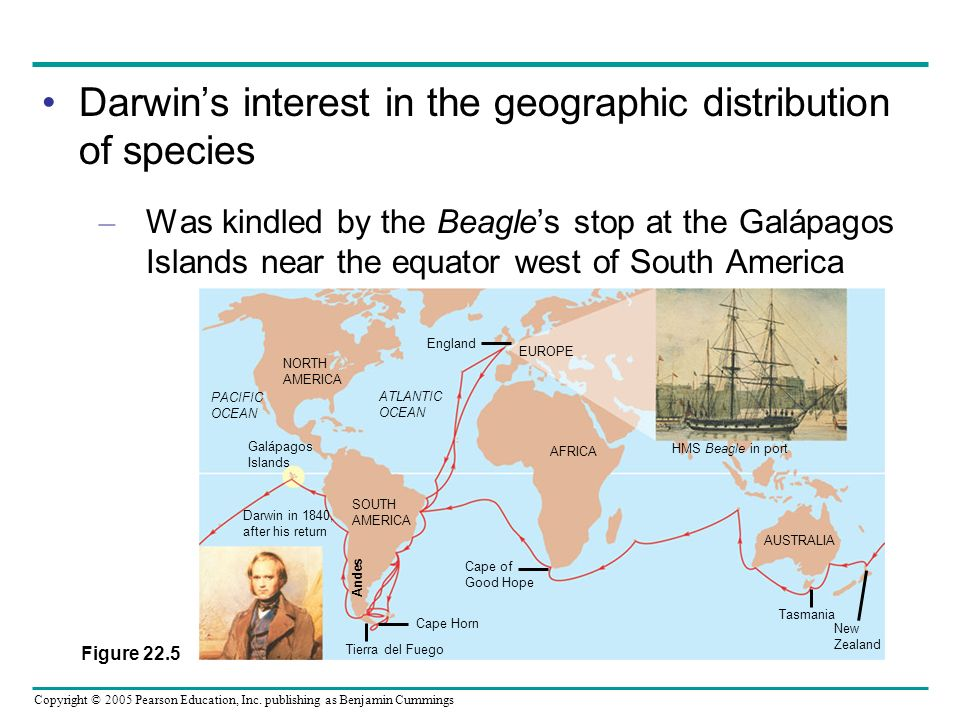 Darwin's interest in the geographic distribution of species