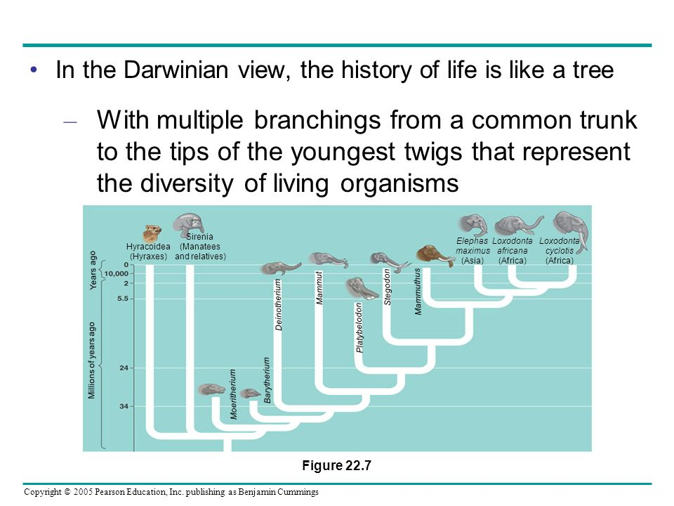 In the Darwinian view, the history of life is like a tree