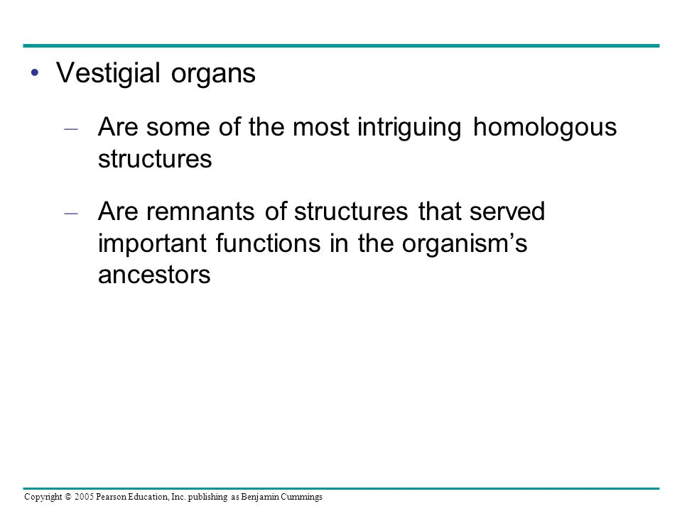 Vestigial organs Are some of the most intriguing homologous structures