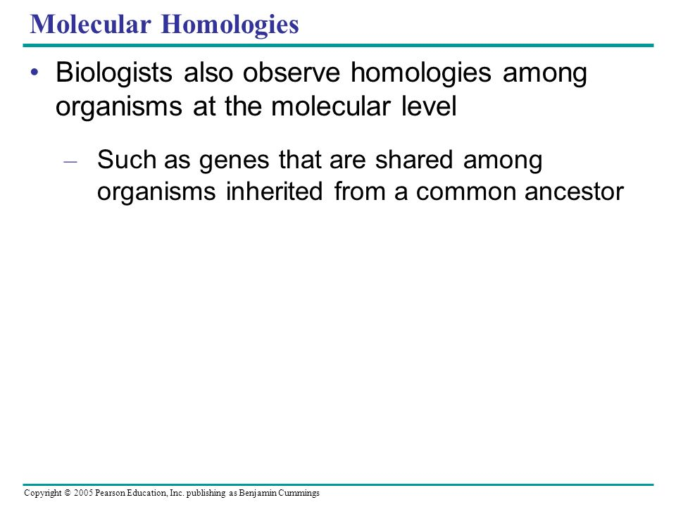 Molecular Homologies Biologists also observe homologies among organisms at the molecular level.