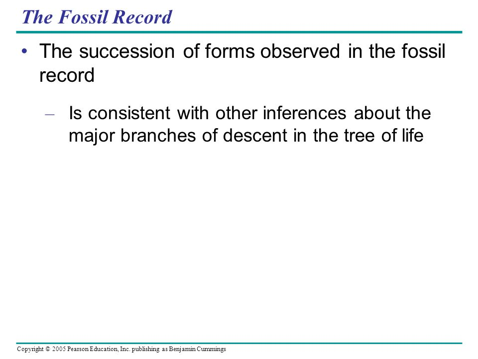 The succession of forms observed in the fossil record