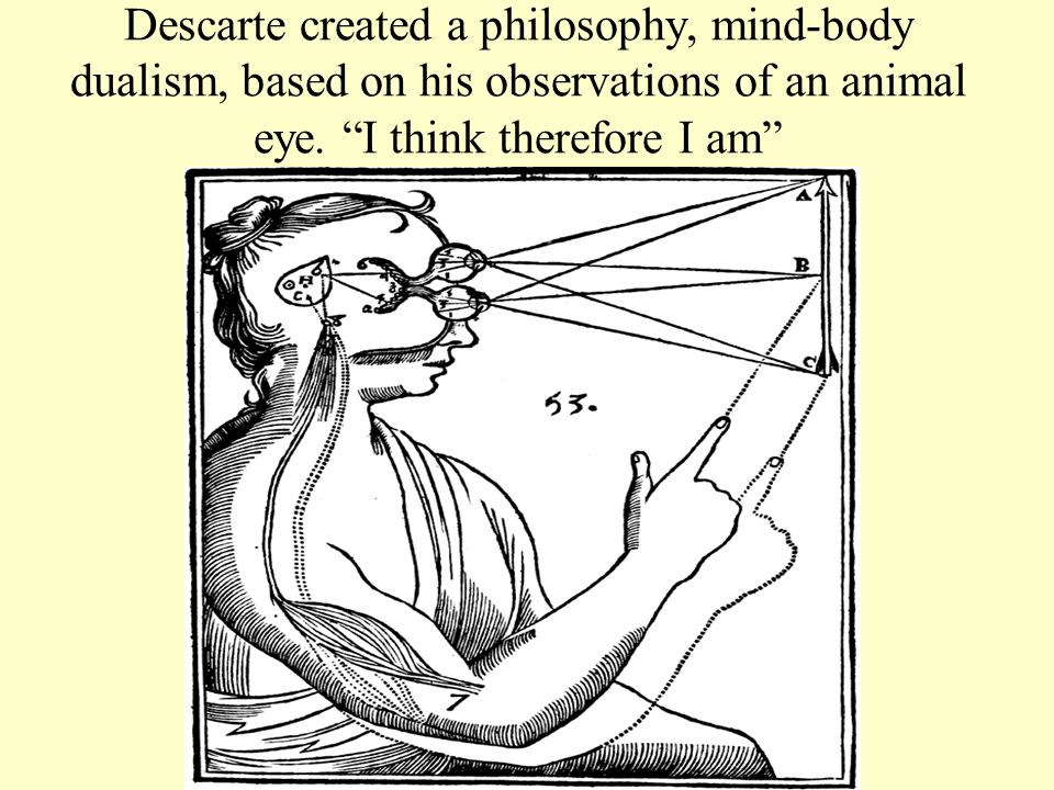 Descarte created a philosophy, mind-body dualism, based on his observations of an animal eye.