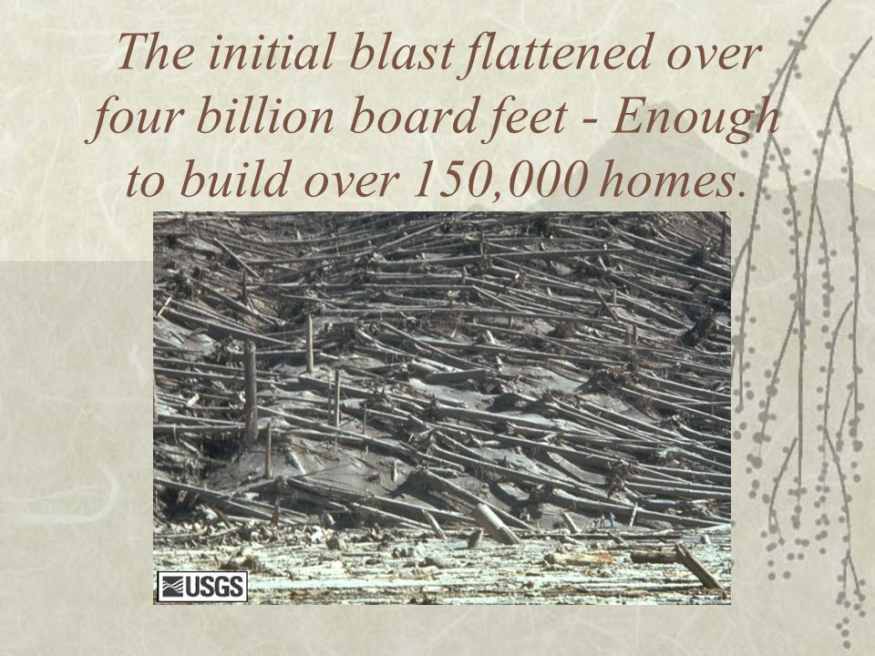 The initial blast flattened over four billion board feet - Enough to build over 150,000 homes.