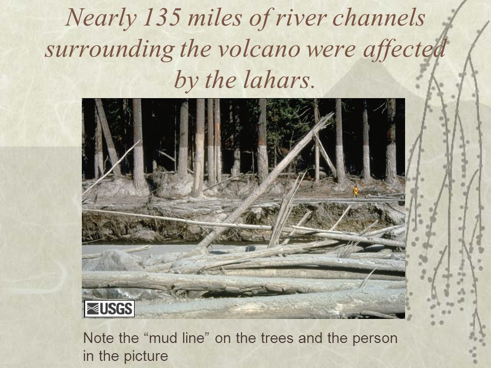Nearly 135 miles of river channels surrounding the volcano were affected by the lahars.
