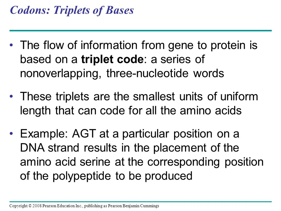 Codons: Triplets of Bases