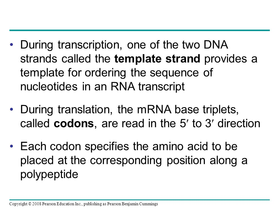 During transcription, one of the two DNA strands called the template strand provides a template for ordering the sequence of nucleotides in an RNA transcript