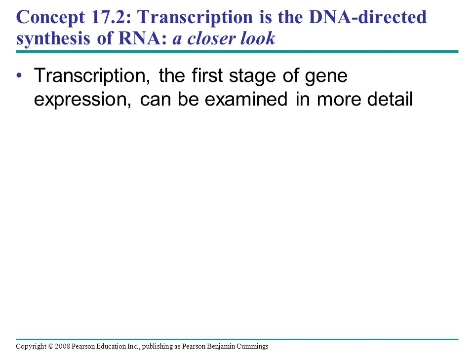 Concept 17.2: Transcription is the DNA-directed synthesis of RNA: a closer look