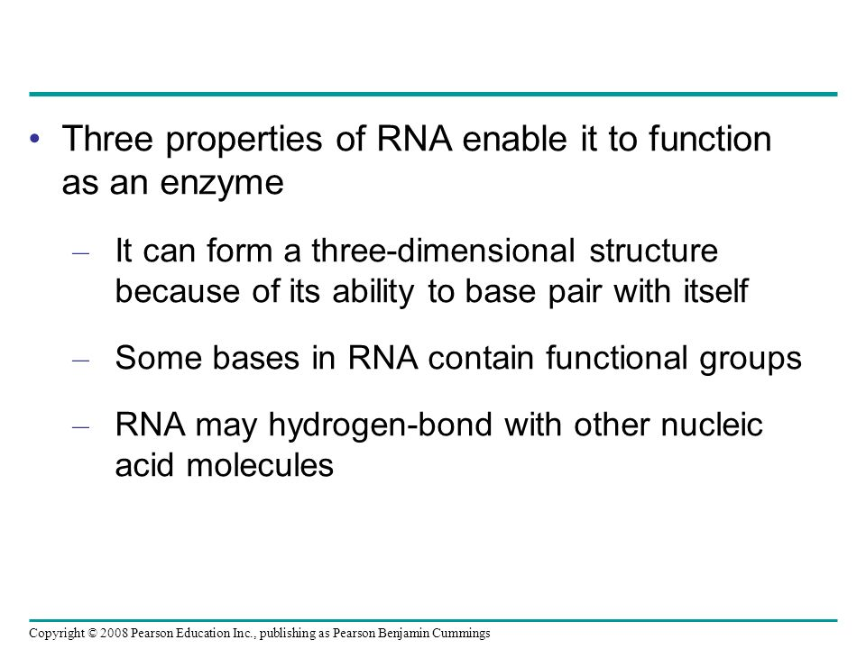 Three properties of RNA enable it to function as an enzyme