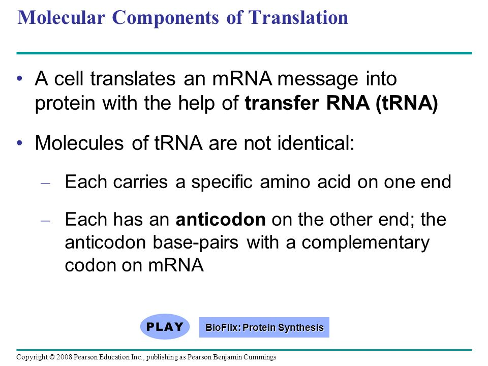 Molecular Components of Translation