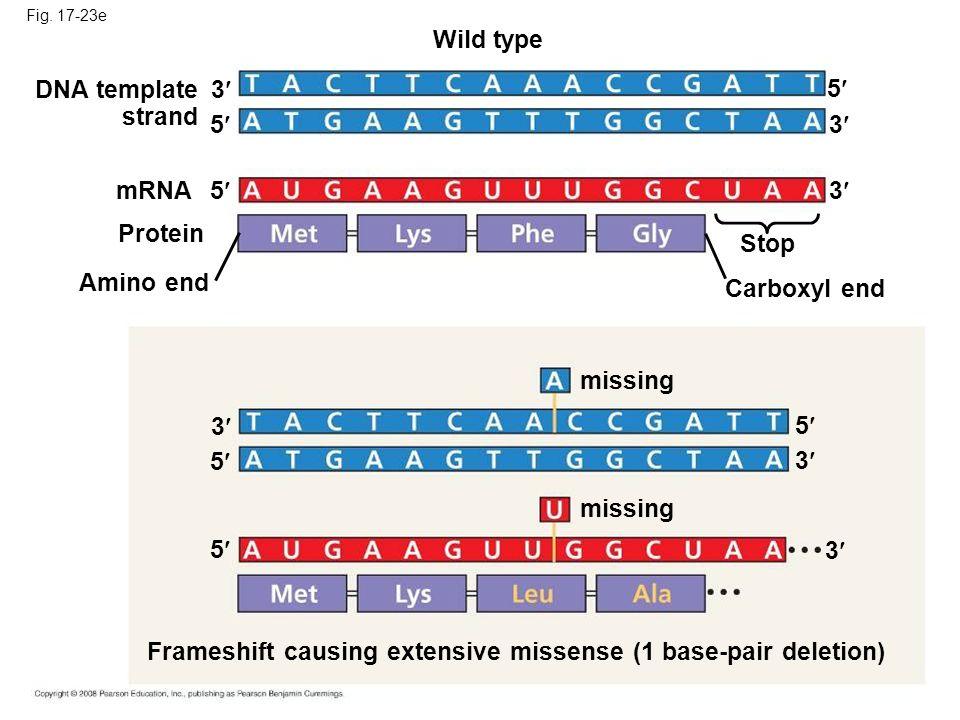 Frameshift causing extensive missense (1 base-pair deletion)