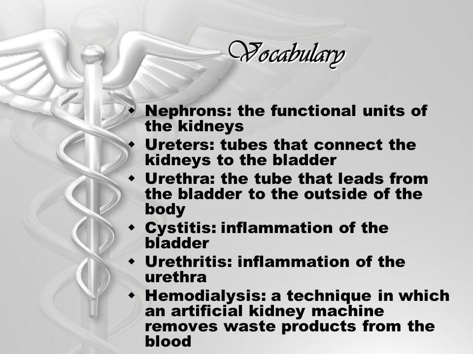 Vocabulary Nephrons: the functional units of the kidneys