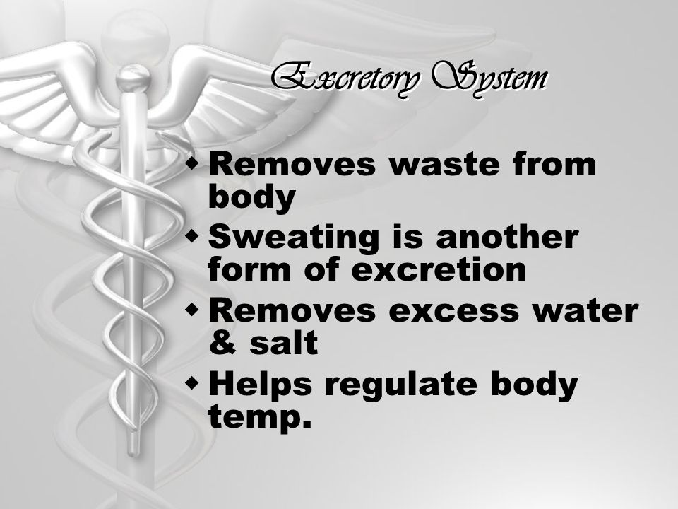 Excretory System Removes waste from body
