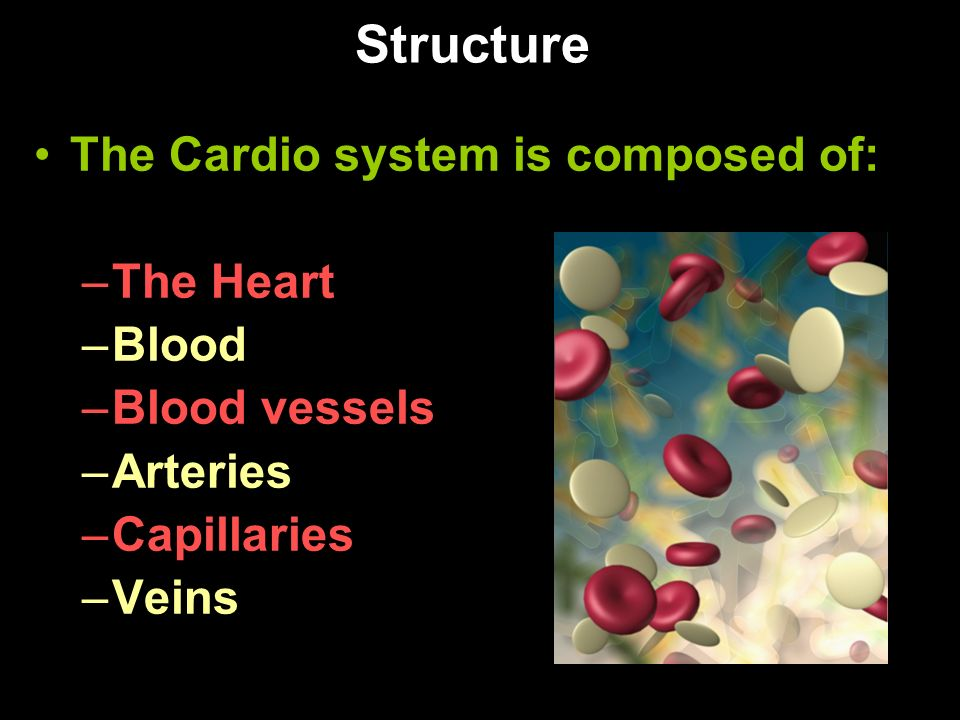 Structure The Cardio system is composed of: The Heart Blood