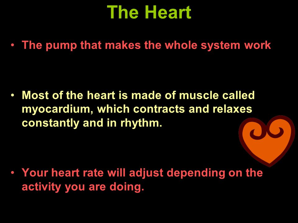 The Heart The pump that makes the whole system work
