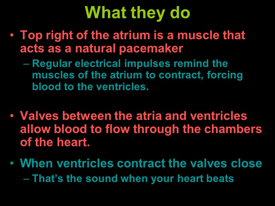What they doTop right of the atrium is a muscle that acts as a natural pacemaker.