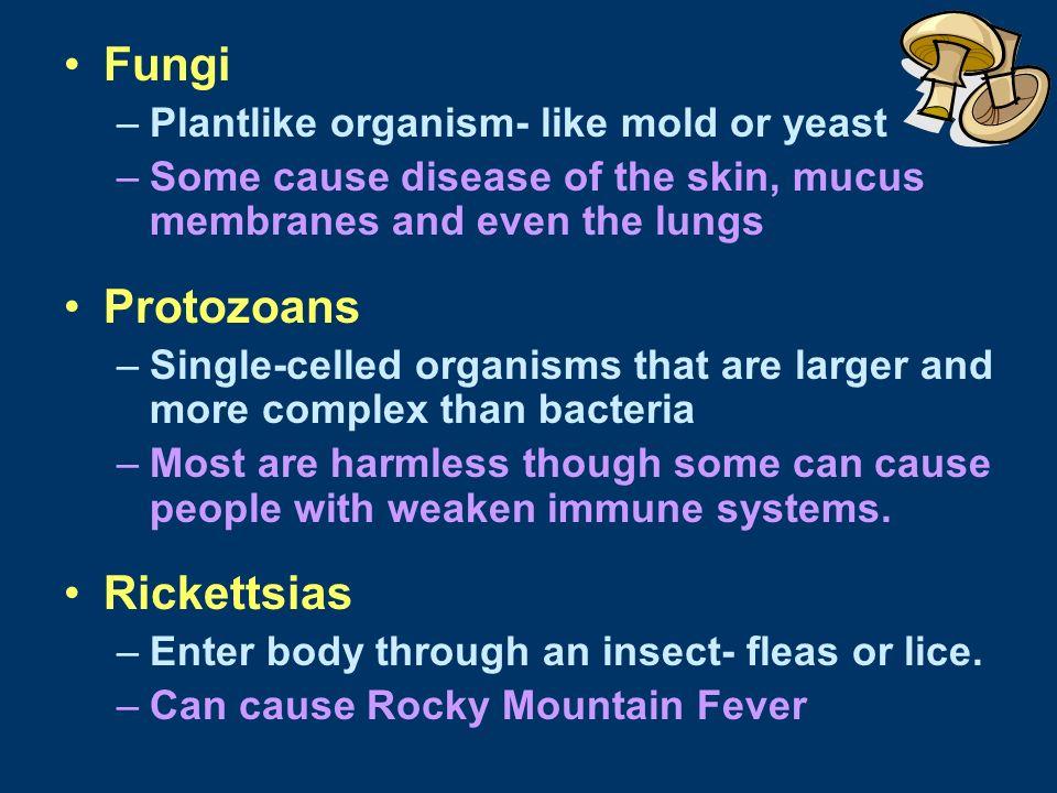 Fungi Protozoans Rickettsias Plantlike organism- like mold or yeast