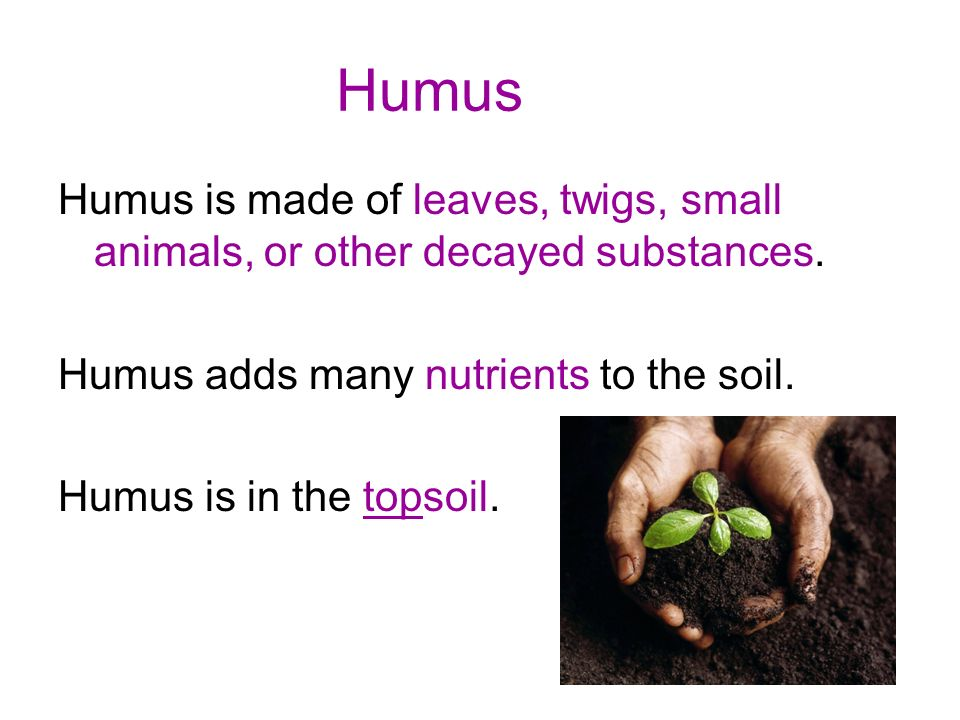 Humus Humus is made of leaves, twigs, small animals, or other decayed substances. Humus adds many nutrients to the soil.