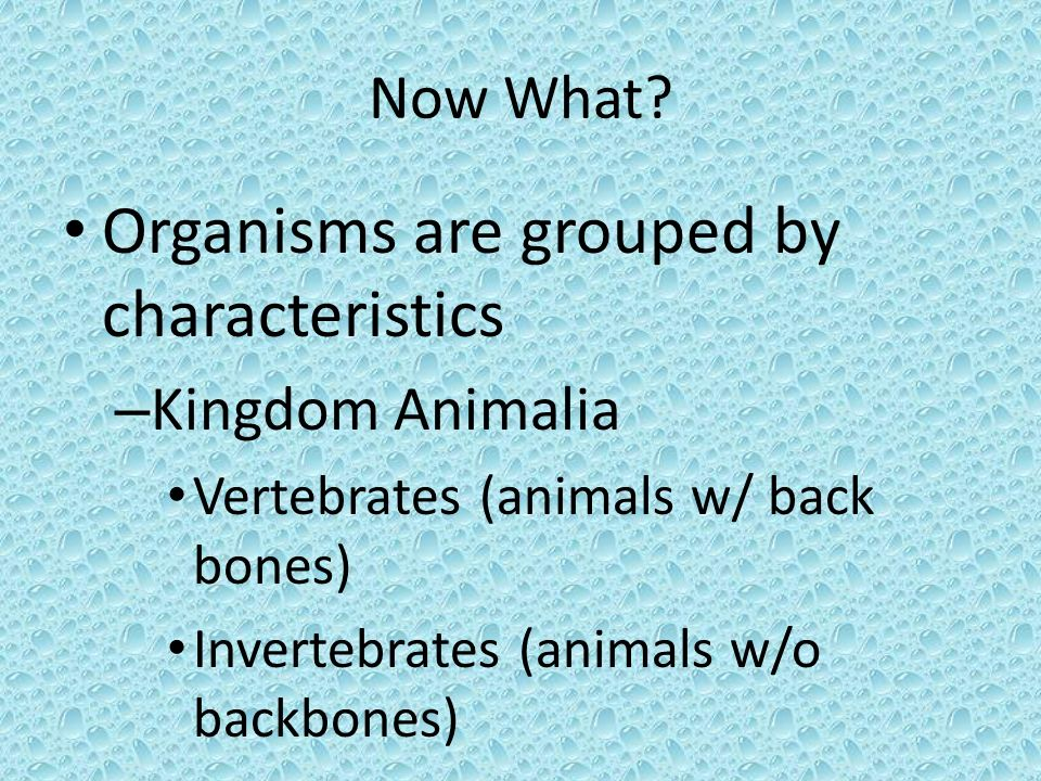 Organisms are grouped by characteristics