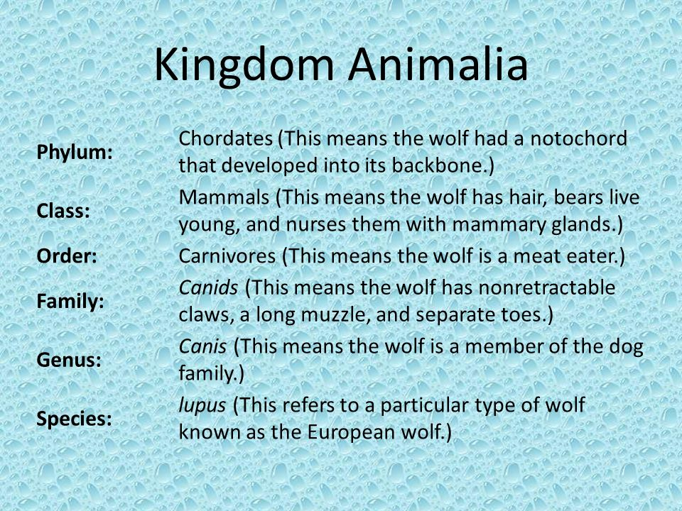 Kingdom Animalia Phylum:
