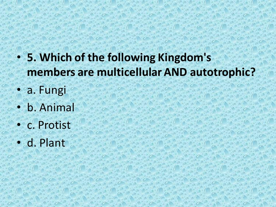 5. Which of the following Kingdom s members are multicellular AND autotrophic