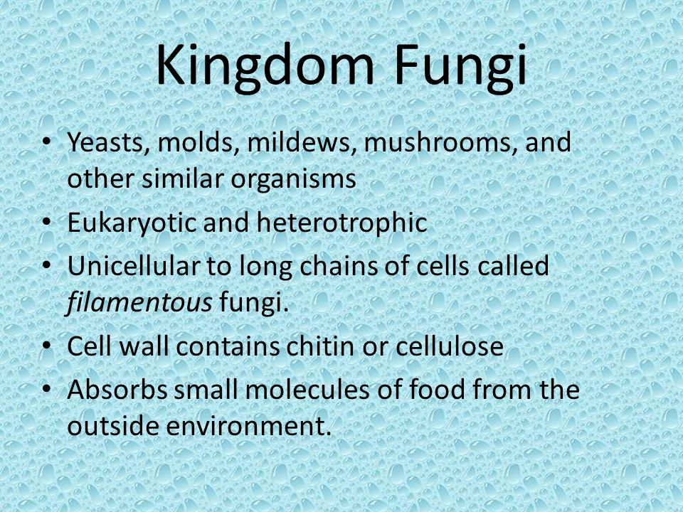 Kingdom Fungi Yeasts, molds, mildews, mushrooms, and other similar organisms. Eukaryotic and heterotrophic.