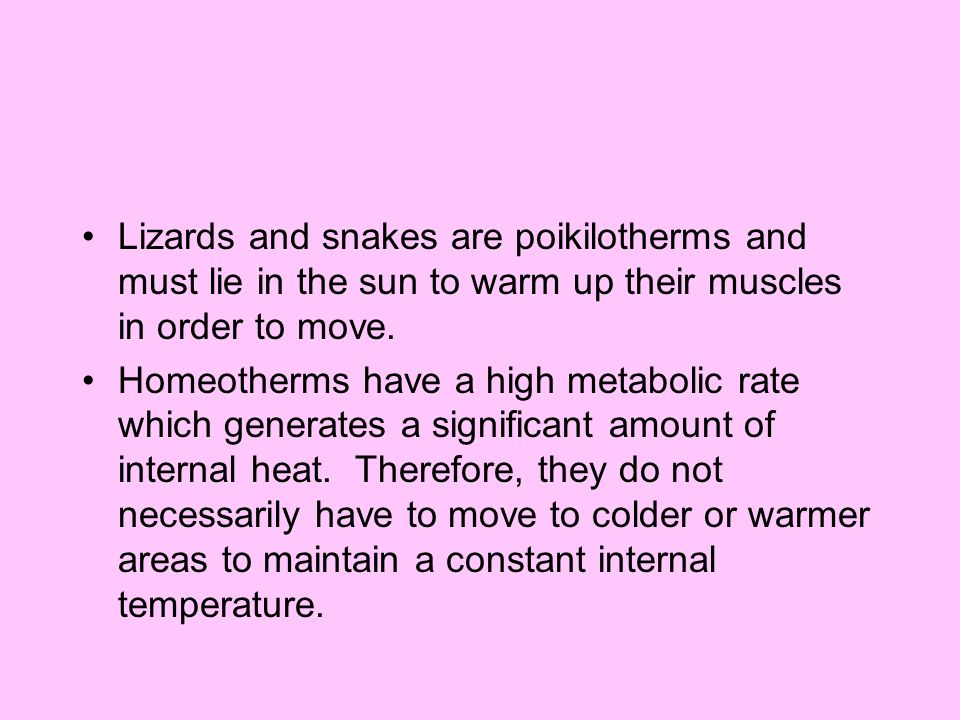 Lizards and snakes are poikilotherms and must lie in the sun to warm up their muscles in order to move.