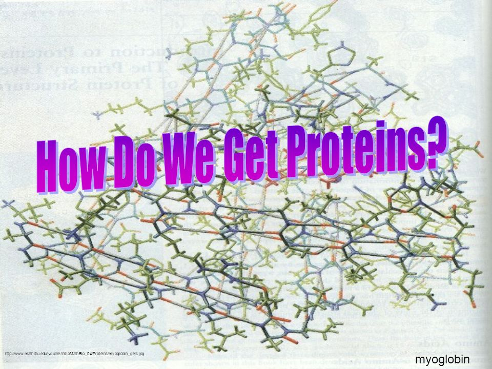 How Do We Get Proteins myoglobin