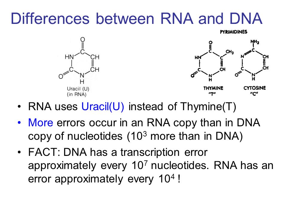 Differences between RNA and DNA